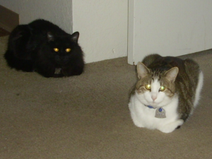 cat loaves